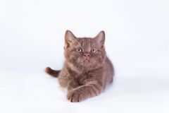 Cat on white, kitten, cute, fluffy ball. Beautiful kittens on a white background, playing, sitting, portrait royalty free stock image