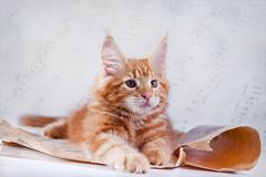 Cat on white, kitten, cute, fluffy ball. Beautiful kittens on a white background, playing, sitting, portrait stock photo