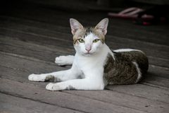 Cat white look looking cute royalty free stock photos