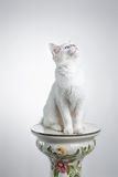 Cat on white looking up Royalty Free Stock Image