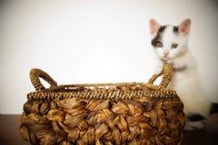 Cat White Love-potfoto royalty-vrije stock foto