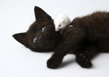 Cat & White mouse Royalty Free Stock Photography