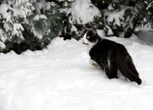 Cat on white snow Royalty Free Stock Photography