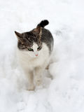 Cat on white snow Royalty Free Stock Photo