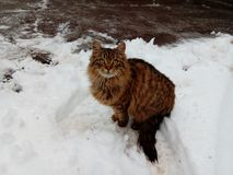 Cat in the white snow Stock Image