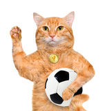 Cat with a white soccer ball . Royalty Free Stock Photo
