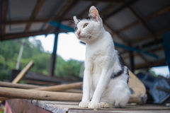 Cat. White cat  stand on wood Stock Images
