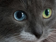 Cat, who confused contact lenses In a rush. Stock Photo