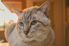 The Cat. Cat who likes to walk in the dormitory Royalty Free Stock Photography