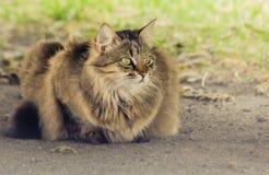 Cat Who Walked sola Fotografía de archivo