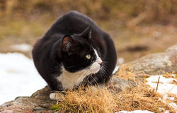 Cat Who Walked sola Imagenes de archivo
