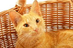 Cat in wicker basket Royalty Free Stock Images