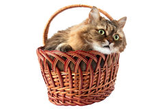 Cat in a wicker basket Royalty Free Stock Image