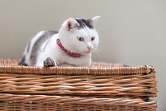 Cat on wicker basket Royalty Free Stock Photo