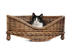 Cat in wicker bed Royalty Free Stock Photos