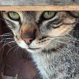 Cat wiew. Mi cat& x27;s head in the garden door Royalty Free Stock Images