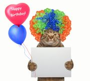 Cat in a wig holds a blank sign and balloons 2