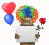 Cat in a wig holds a blank sign and a rose