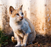 Cat in wild. Cute cat in south east asia wild field Stock Image