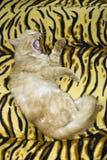 Cat wild Stock Image
