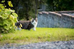 The cat in the wild. On the green grass Royalty Free Stock Photos