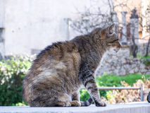 Cat. Wild Cat outside in Spain Stock Images