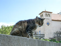 Cat. Wild Cat outside in Spain Royalty Free Stock Photo