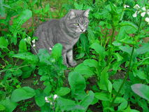Cat in wild rocket Royalty Free Stock Photography