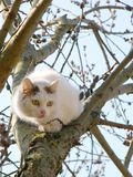 Cat on a willow. Three-coloured cat sitting on the spring willow Stock Images