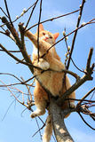 Cat on willow Stock Images