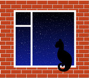 Cat on window Stock Image
