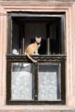 Cat at the window. Sitting at the window the cat looks outside royalty free stock image
