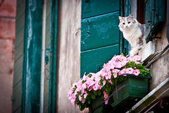 Cat in the window stock photos