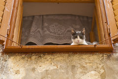 Cat in window. Cat staring down at You Royalty Free Stock Image