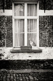 Cat in the window Royalty Free Stock Photography
