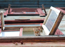 Cat in the window stock image