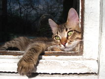 The cat in the window Stock Images