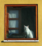 Cat in window Stock Image