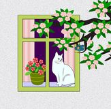 Cat in the Window Stock Images