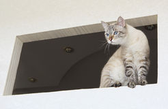 Cat on the window. Royalty Free Stock Image