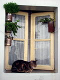 Cat by the window. A cat by a window in Portugal Stock Image