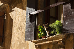Cat on window. In early sunday morning Royalty Free Stock Photos