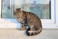 Cat on the window Stock Photos