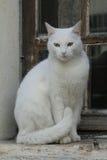 Cat Window Imagens de Stock
