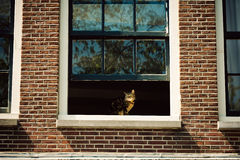 Cat at the window in Amsterdam, Netherlands Stock Image