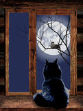 Cat in the window and bird on branch at moonlit Stock Photography