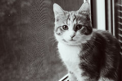 Cat on the window Royalty Free Stock Images