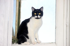 Cat at the window Royalty Free Stock Photos