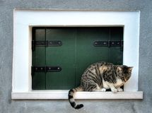 cat in window, Burano, Venice Italy Royalty Free Stock Image