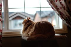 Cat and window. Cats see the world differently than humans. This lucky guy likes to look out the window stock photo